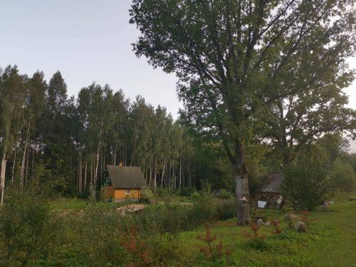 Sodyba miškuose prie prūdo