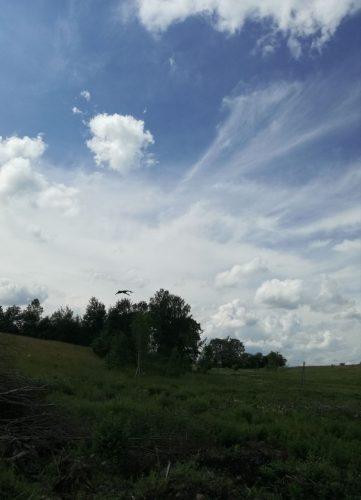75,5 arų ir 125 a sklypai 21 km nuo Vilniaus ribos su beržynu ir upe